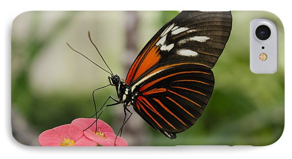 The Red Admiral  IPhone Case by MaryJane Armstrong