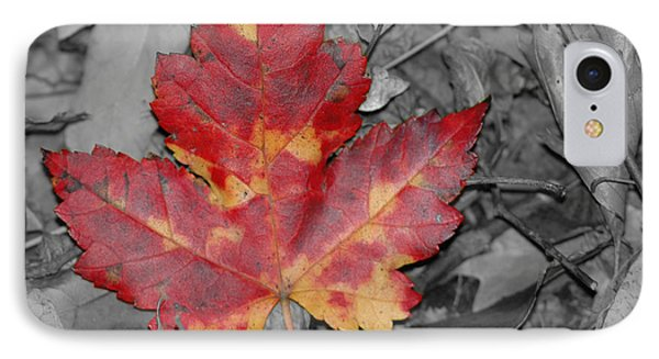 The Red Leaf Phone Case by Paul Ward