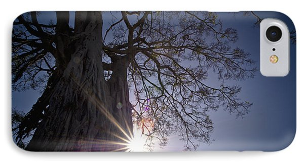 The Sunlight Shines Behind A Tree Trunk Phone Case by David DuChemin