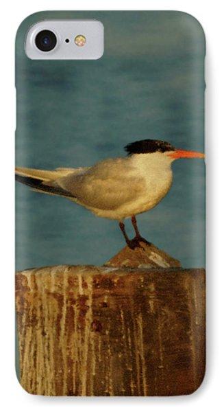 The Tern Phone Case by Ernie Echols