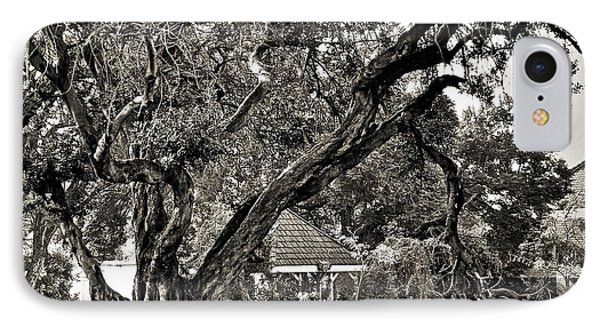 The Tree Which Moves ... Phone Case by Gwyn Newcombe