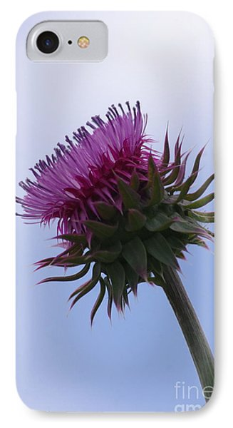 Thistle 1 IPhone Case