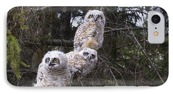 Three Great Horned Owl Bubo Virginianus Phone Case by Richard Wear