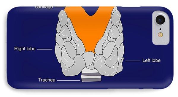 Thyroid Gland, Artwork Phone Case by Francis Leroy, Biocosmos