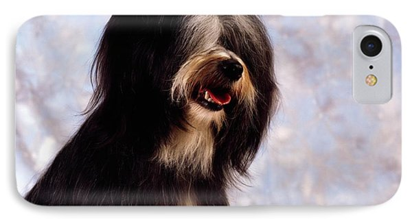 Tibetan Terrier IPhone Case by The Irish Image Collection