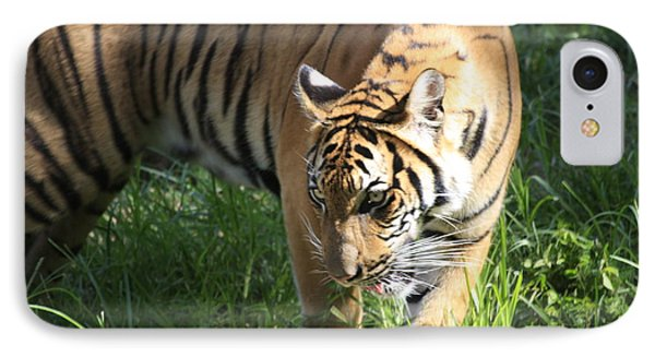Tiger IPhone Case by Jerry Bunger