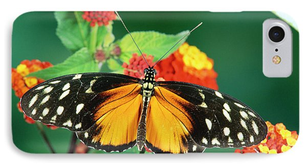 Tiger Longwing Heliconius Hecale Phone Case by Michael & Patricia Fogden