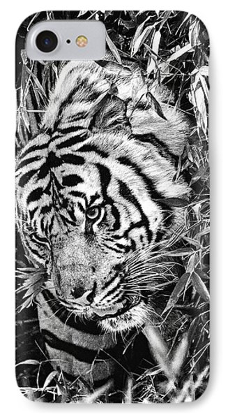IPhone Case featuring the photograph Tiger by Perla Copernik