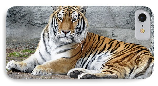 Tiger Resting IPhone Case