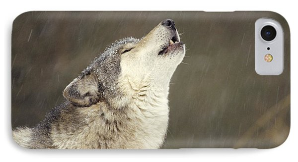 Timber Wolf Canis Lupus Howling IPhone Case by Gerry Ellis