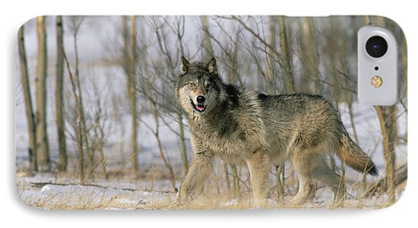 Timber Wolf Canis Lupus, North America IPhone Case by Konrad Wothe
