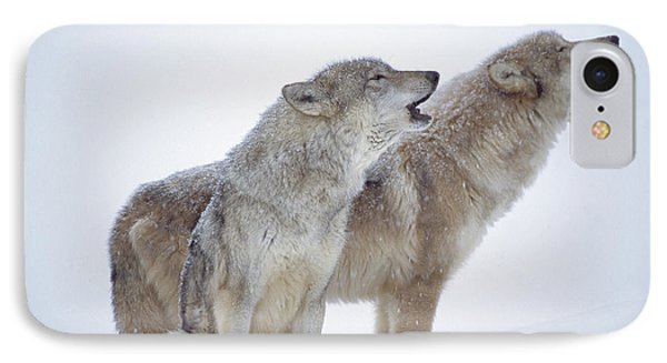 Timber Wolf Pair Howling In Snow North IPhone Case by Tim Fitzharris
