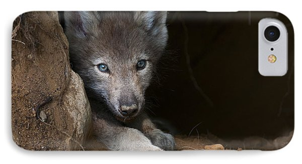 Timber Wolf Pup In Den Phone Case by Michael Cummings