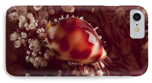 Tiny Cowrie Shell On Dendronephtya Soft Phone Case by Mathieu Meur