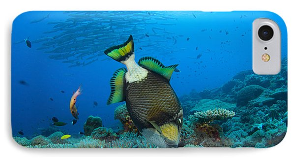 Titan Triggerfish Picking At Coral Phone Case by Steve Jones