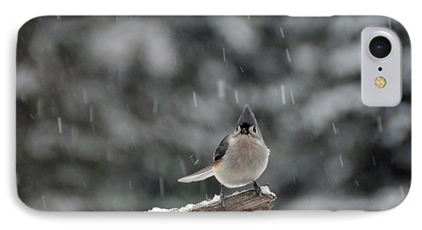 Titmouse Endures Snowstorm IPhone Case by Mike Martin