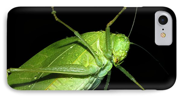 To An Insect Pretty Katydid Phone Case by Tracie Kaska