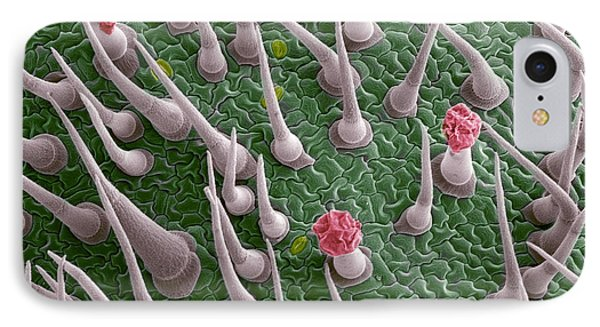 Tomato Leaf Surface, Sem Phone Case by Steve Gschmeissner