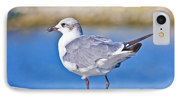Topsail Seagull IPhone Case by Betsy Knapp