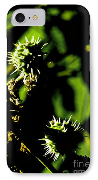 IPhone Case featuring the photograph Touched By The Late Afternoon Sun by Steve Taylor