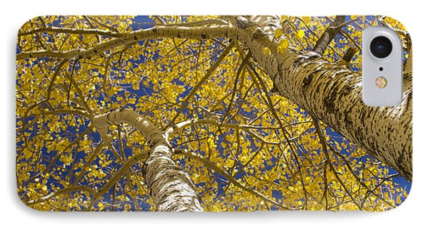 Towering Autumn Aspens With Deep Blue Sky Phone Case by James BO  Insogna