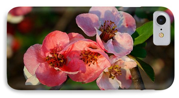 IPhone Case featuring the photograph Toyo Nishiki Quince by Kathryn Meyer