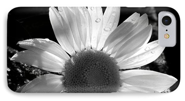 IPhone Case featuring the photograph Translucent Daisy by Cindy Haggerty