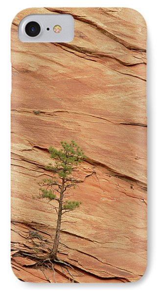 Tree Clinging To Sandstone Formation Phone Case by Gerry Ellis