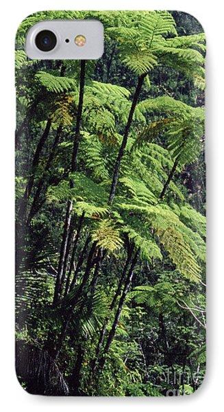 Tree Ferns El Yunque Phone Case by Thomas R Fletcher