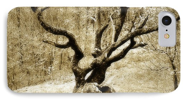 Tree In The Forest Phone Case by Susan Leggett