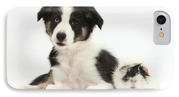 Tricolor Border Collie Pup And Guinea Phone Case by Mark Taylor