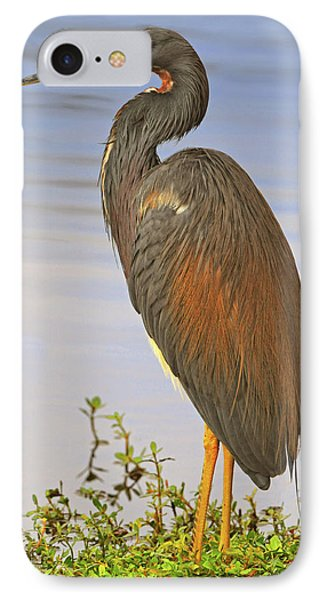 Tricolor Heron Phone Case by Dave Mills