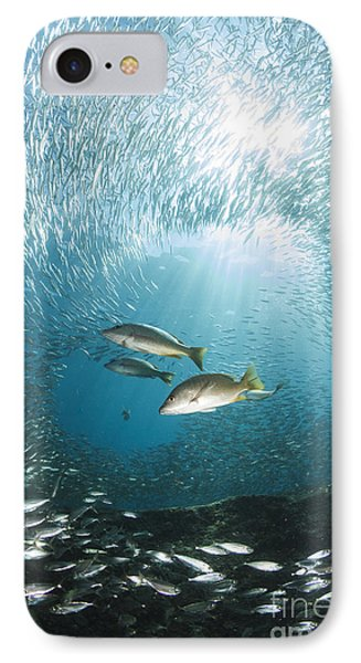 Trio Of Snappers Hunting For Bait Fish Phone Case by Todd Winner