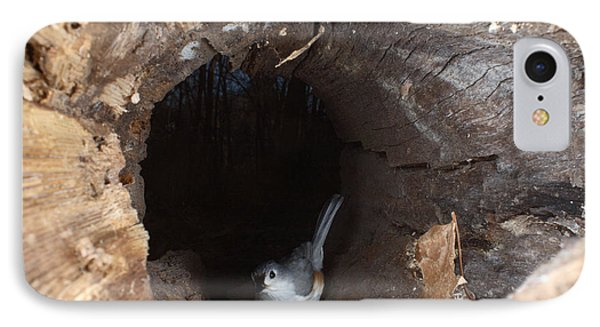 Tufted Titmouse In A Log IPhone 7 Case by Ted Kinsman