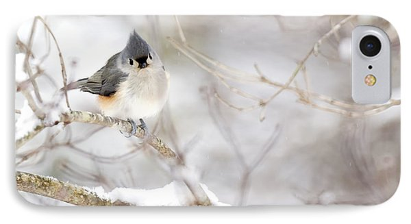 Tufted Titmouse In Snow IPhone Case by Rob Travis