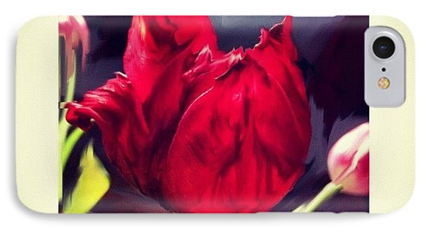 Tulip Aflame IPhone Case by Paul Cutright
