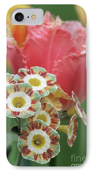 Tulip (tulipa 'fancy Frills') Phone Case by Archie Young