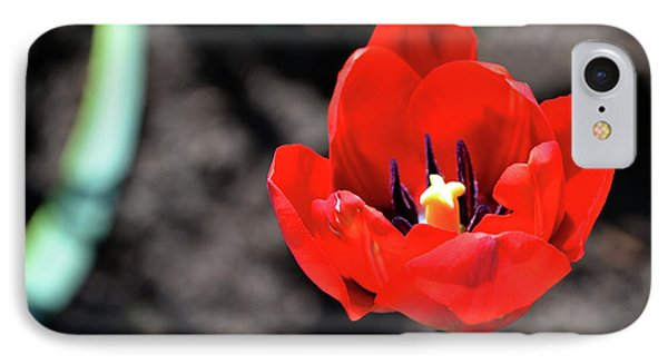 IPhone Case featuring the photograph Tulips Blooming by Pravine Chester