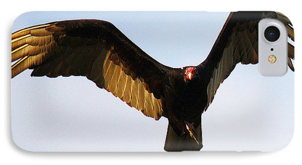 IPhone Case featuring the photograph Turkey Vulture Evening Flight by Roena King