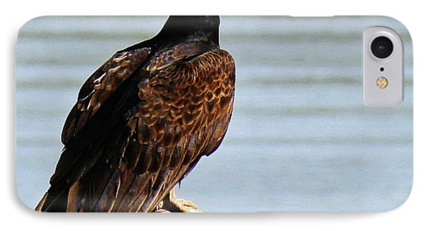 IPhone Case featuring the photograph Turkey Vulture On Limb by Roena King