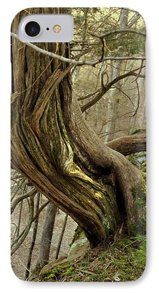 Twisted Cedar Phone Case by Marty Koch