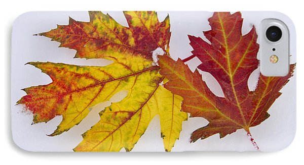 Two Autumn Maple Leaves  Phone Case by James BO  Insogna