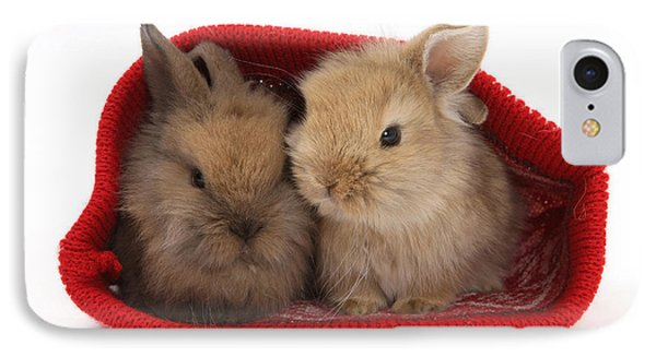 Two Baby Lionhead-cross Rabbits Phone Case by Mark Taylor