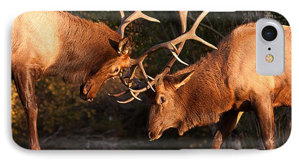 Two Bull Elk Sparring 91 Phone Case by James BO  Insogna