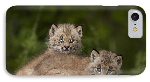 Two Canada Lynx Lynx Canadensis Kittens Phone Case by Richard Wear