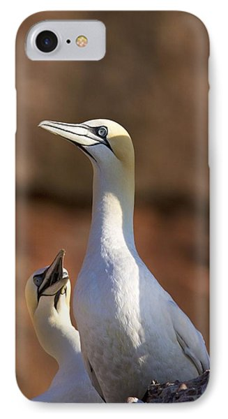Two Gannets Interacting Perce, Quebec Phone Case by Richard Wear