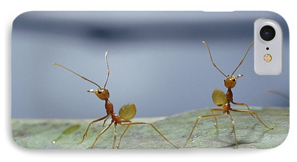 Far North Queensland iPhone 7 Case - Two Green Tree Ants Standing by Jason Edwards