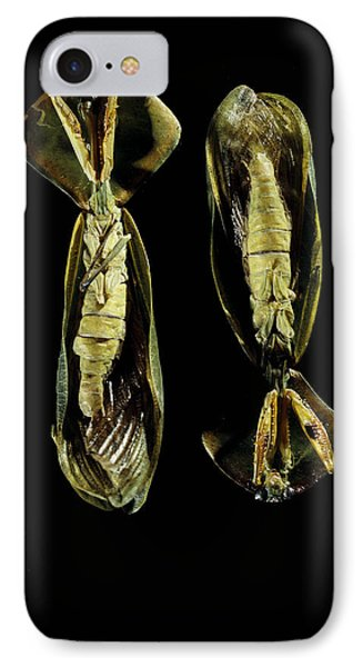 Two Praying Mantises IPhone Case by Volker Steger