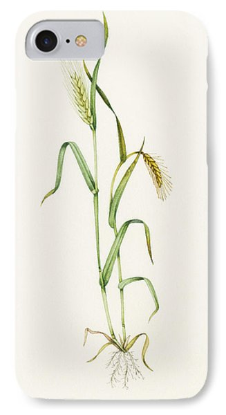 Two-row Barley (hordeum Distichum) Phone Case by Lizzie Harper