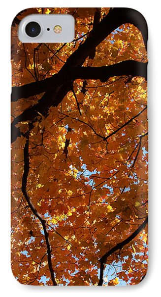 Under The Canopy Phone Case by Lyle Hatch